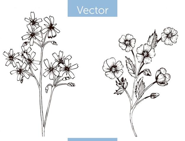 Einfarbige gezeichnete wildflowers des vektors hand auf weißem hintergrund