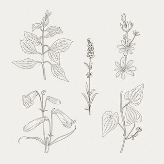 Einfarbige kräuter und blüten