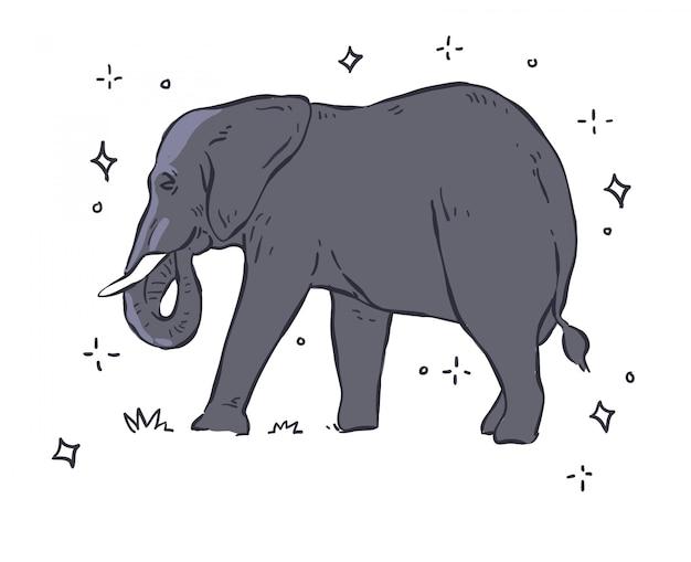 Elefant auf weißem hintergrund