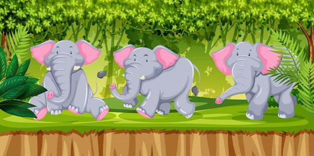Elefanten in der jugnle-szene