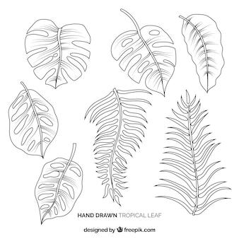 Elegante hand gezeichnete tropische blattsammlung
