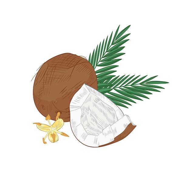 Elegante natürliche zeichnung von geknackter kokosnuss, palmenzweigen und blühenden blumen lokalisiert auf weißem hintergrund.