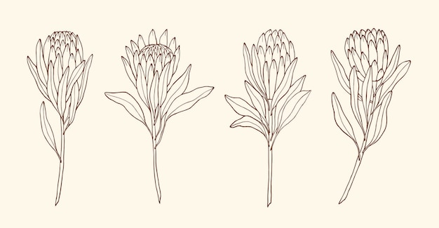 Elegante sammlung von skizzenblumen