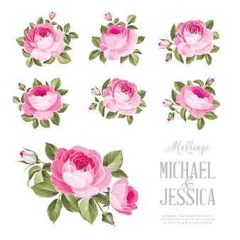 Elegante verbindungskartenelemente der rosen getrennt auf weiß