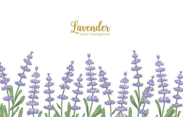 Eleganter horizontaler hintergrund, verziert mit lavendelblüten und grünen blättern