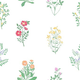 Elegantes botanisches nahtloses muster mit wiesenheilkräutern