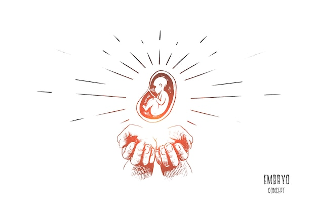 Embryo-konzeptillustration