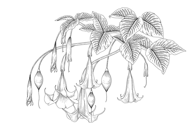 Engels trompetenblume (brugmansia) hand gezeichnete botanische illustrationen.