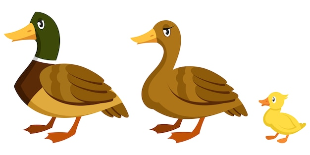 Entenfamilie im cartoon-stil. zuchtvögel unterschiedlichen geschlechts und alters.