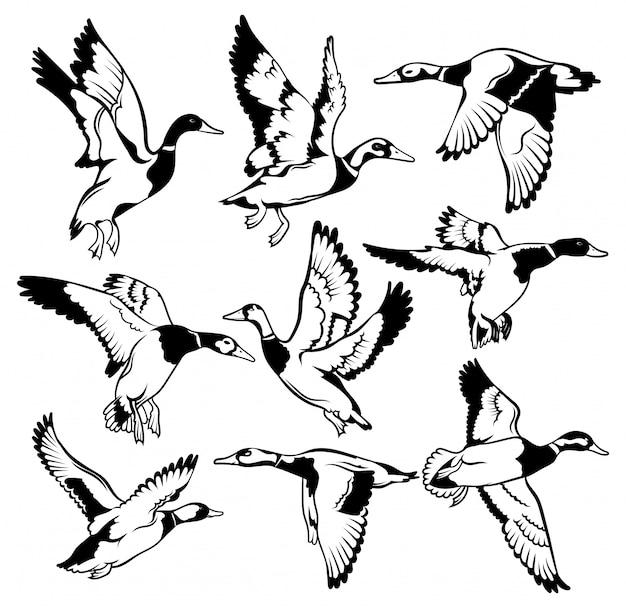 Entenschwarm. ein cartoon-vogelschwarm. schwarzweiss-illustration von fliegenden vögeln.