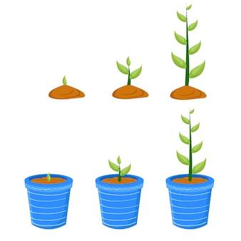 Entwicklung der pflanze in töpfen vektor-illustration