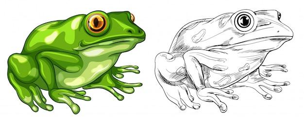Entwurf und farbiges bild des frosches