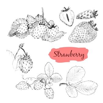 Erdbeer-zeichnungssatz