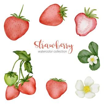 Erdbeere in aquarell-sammlung mit blume und blatt mit zweig