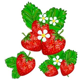 Erdbeeren mit blattvektorabbildung.
