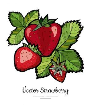 Erdbeerillustrationsisolat auf weiß