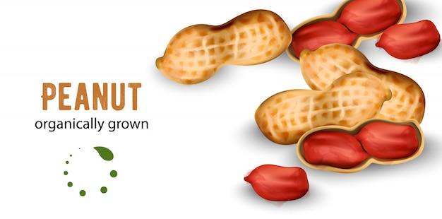 Erdnüsse aus biologischem anbau im aquarellstil