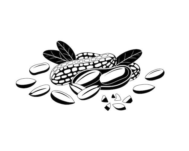 Erdnuss schwarzes symbol auf weiß.