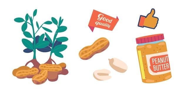 Erdnussbutter im glas und pflanze. snack, geschälte und ungeschälte nüsse, getreideprotein-frühstücksdesign, gesundes energiefutterpaket, erdnuss in der schale, saubere samen. cartoon-vektor-illustration, icons set