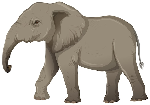 Erwachsener elefant ohne elfenbein im karikaturstil auf weißem hintergrund