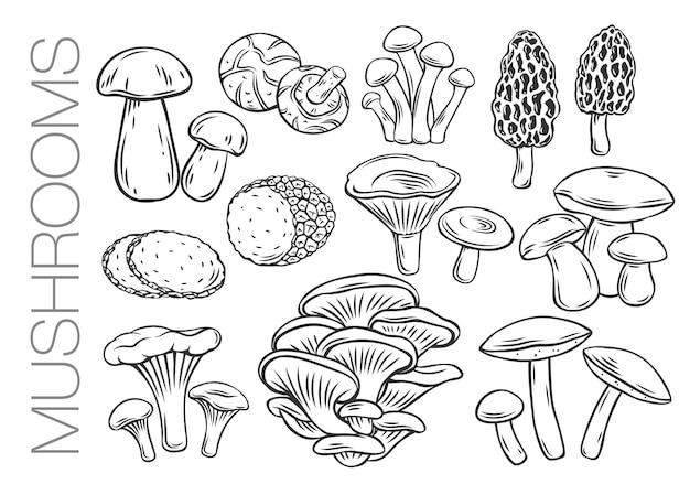 Essbare pilze umreißen symbole