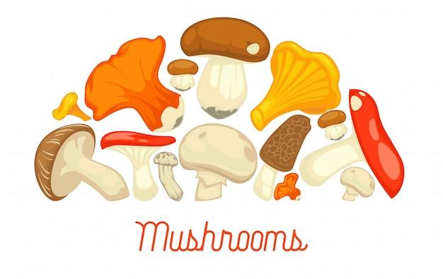 Essbares pilzartiges plakat der pilze. vector flachen champignon- und steinpilz- oder waldpfifferlings- und -hummerpilz