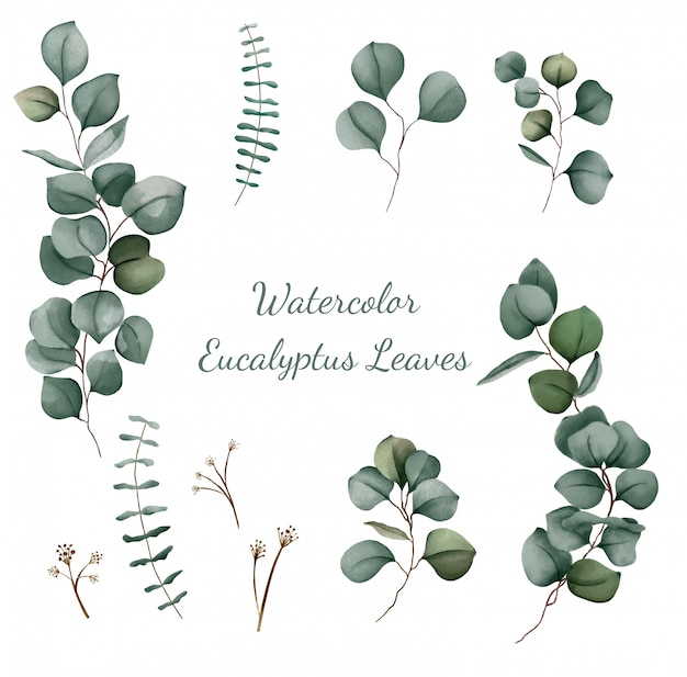 Eukalyptus aquarell set vektor