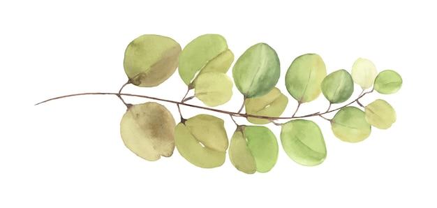 Eukalyptusblätter und zweige aquarell handgemalte illustration. grüne eukalyptusblätter elemente pinsel isoliert auf weißem hintergrund.
