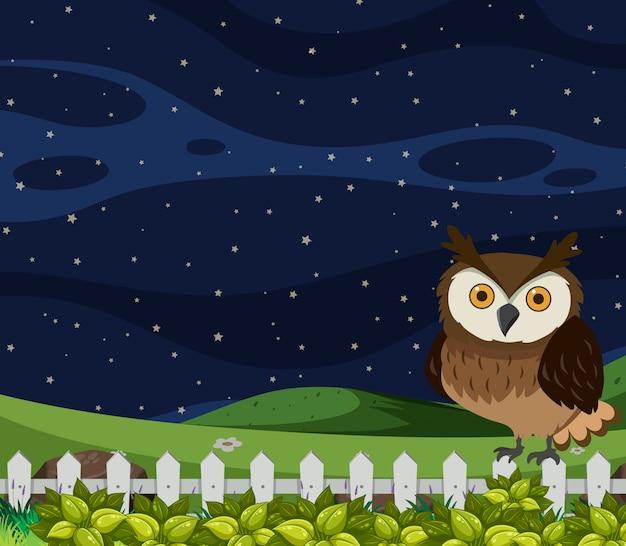 Eule bei nacht szene