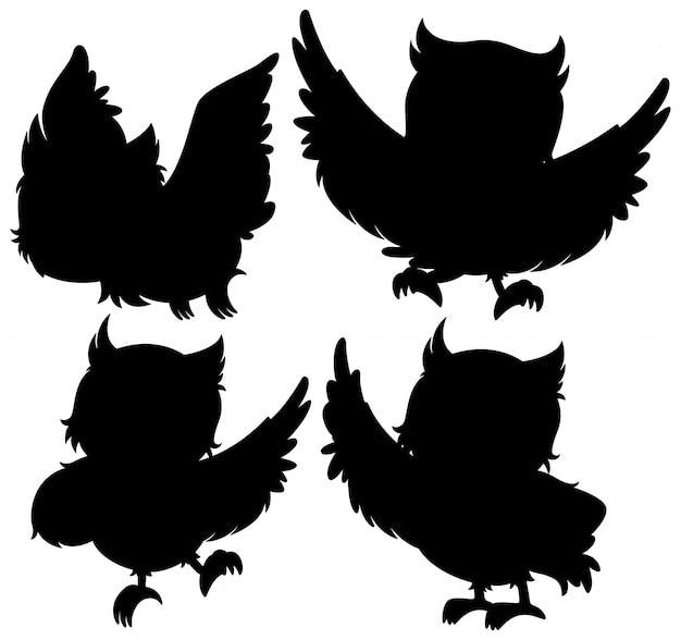 Eule mit ihrer silhouette