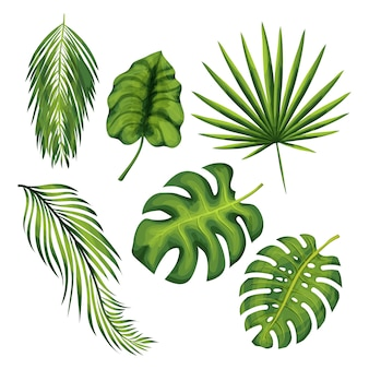 Exotische dschungelpflanzenblätter-vektorillustrationen eingestellt. palme, banane, farn, monstera verzweigt sich lokalisierte zeichnungen