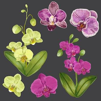 Exotische orchideenblumen eingestellt. tropische blumenelemente für dekoration, muster, einladung.
