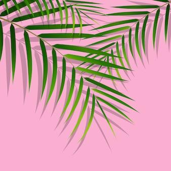 Exotische tropische palmblätter. botanische blätter auf tausendjährigem rosa hintergrund. exotischer hintergrund
