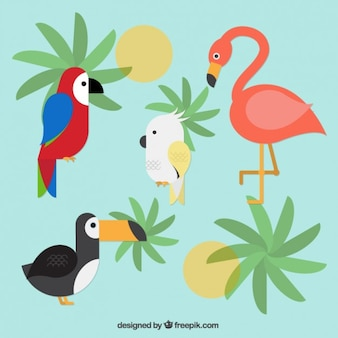 Exotische vögel sammlung