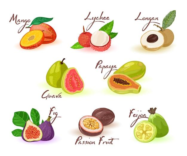 Exotisches fruchtsortiment mit beschriftung für menü, rezept, kochbuch, marktetikett, verpackung.