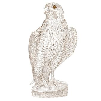 Falcon handzeichnung gravur illustration