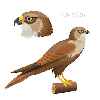 Falcone mit hellgrünen augen kopf im profil und vogel auf stück holz. raubtier mit großen flügeln und scharfem schnabel isoliert realistisch.