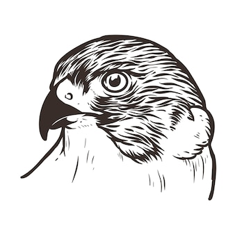 Falkenkopf vogel tattoo illustration
