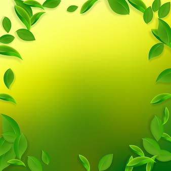 Fallende grüne blätter. chaotische blätter des frischen tees fliegen.