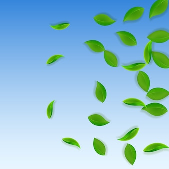 Fallende grüne blätter. frischer tee ordentlich blätter fliegen. frühlingslaub, das auf hintergrund des blauen himmels tanzt