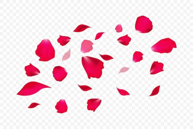 Fallende rote rosenblätter lokalisiert auf weißem hintergrund