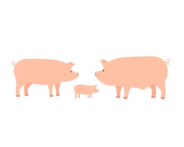 Familie von bauernhof hausschwein, mama papa und ferkel.