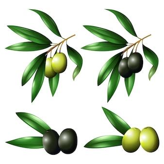 Farbige oliven sammlung