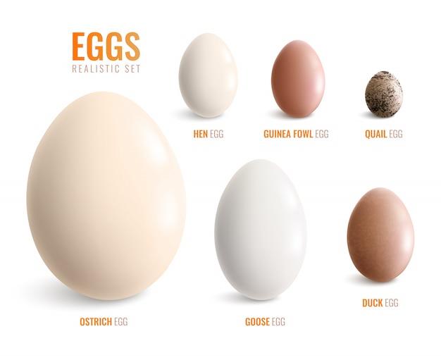 Farbige realistische eierikone gesetzt mit eiern der straußenhenne gans ente perlhuhn wachtel vektor-illustration