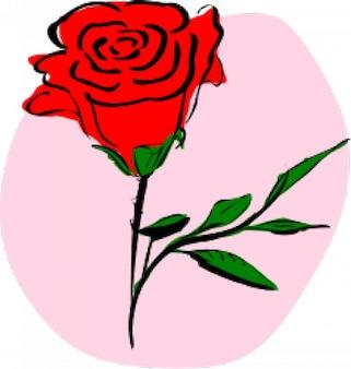 Farbige rose
