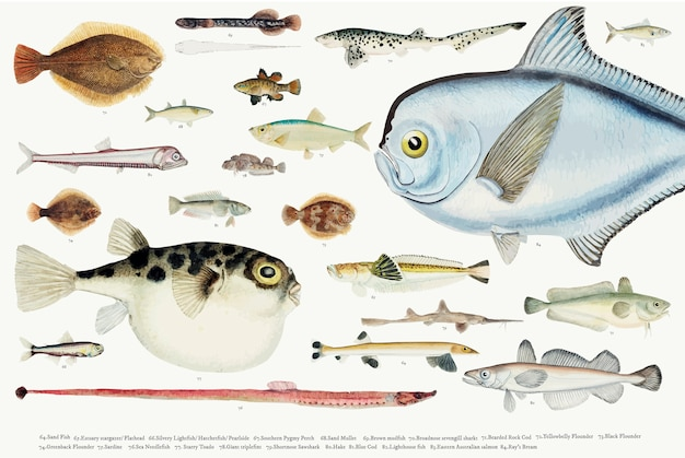 Farbige vektorillustration der fischzeichnungssammlung