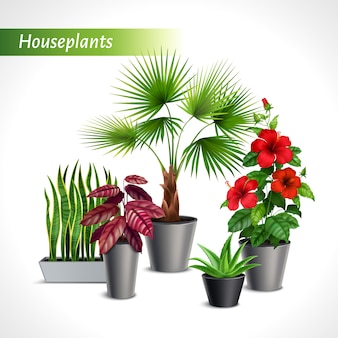 Farbige zimmerpflanzen realistische zusammensetzung mit grüner flora in blumentopfillustration