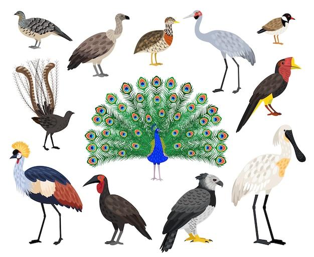 Farbiges exotisches vogelset. schöne fliegende charaktere der karikatur mit schnabel und federn, vektorillustration von vögeln mit niedlichem farbgefieder einzeln auf weißem hintergrund