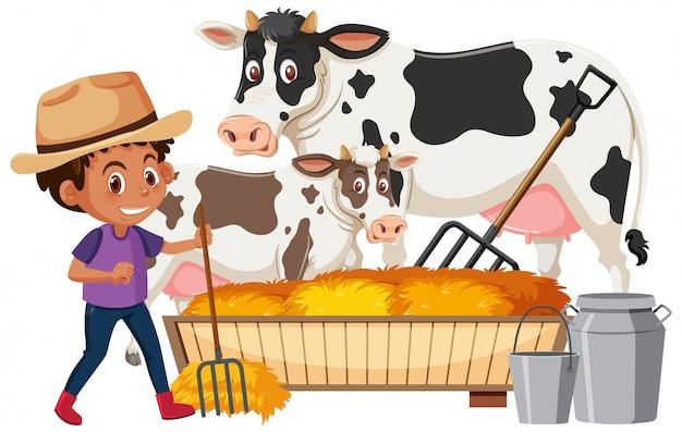 Farmboy, der kühe auf weißem hintergrund füttert