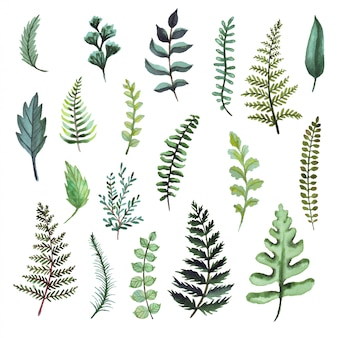 Farn aquarell illustrationen. botanische clipart. satz grüne blätter, kräuter und zweige. blumengestaltungselemente.